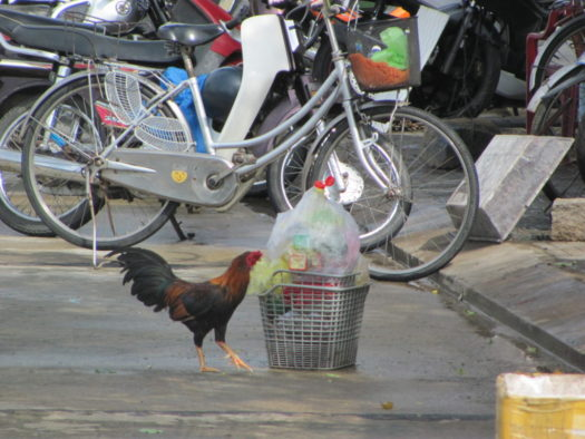 Вьетнаский колорит: куры и мотобайки