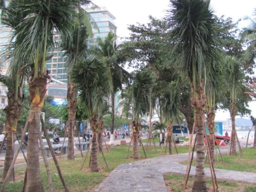 Высаживание пальм в Нячанге