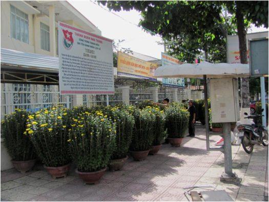 Хризантемы перед Тетом в Нячанге