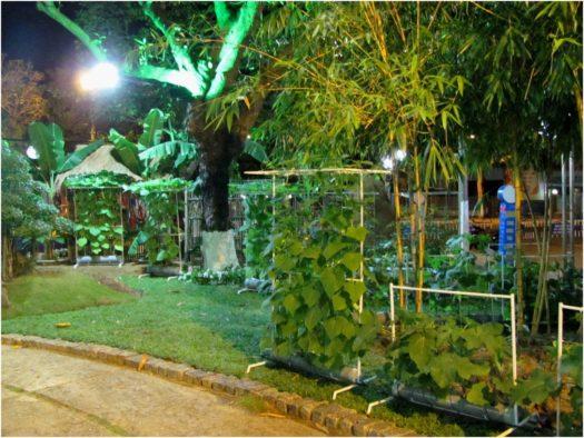 Выставка растений в Нячанге в Тет