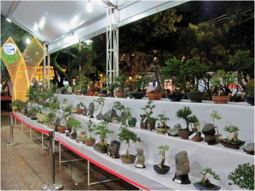 Выставка бонсаев в Тет в Нячанге