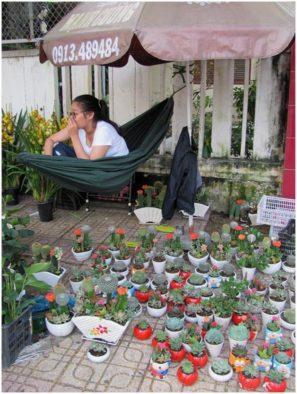 Кактусы в Тет, Нячанг, Вьетнам