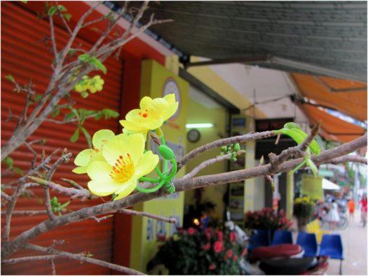 Цветет бонсай пластиковыми цветами в Тет в Нячанге