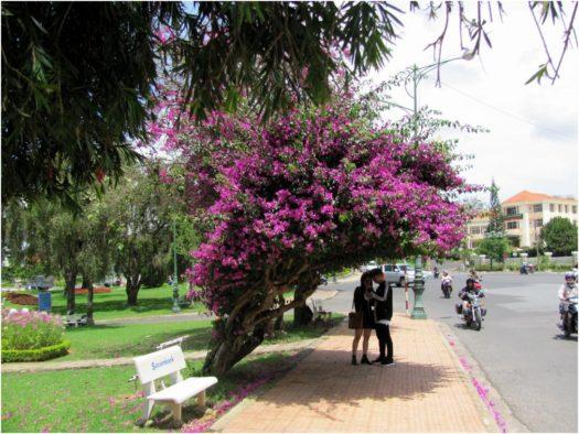 Цветущие растения на улицах Далата, возле озера Суан Хыонг