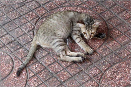 Котенок в Нячанге