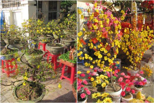 Цветущие бонсаи и пластиковые цветы