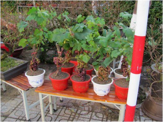 Виноград на улицах Нячанга перед Новым годом