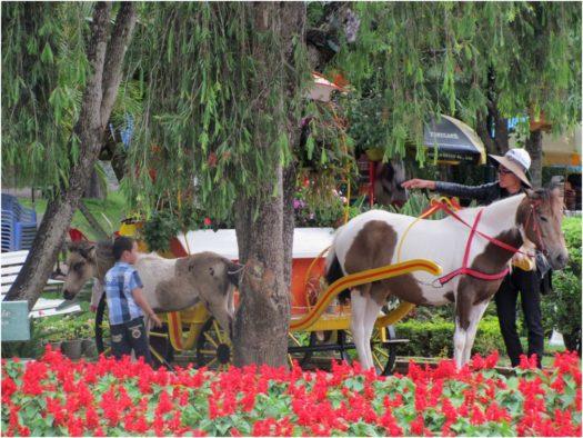 Лошади в Саду цветов Далата