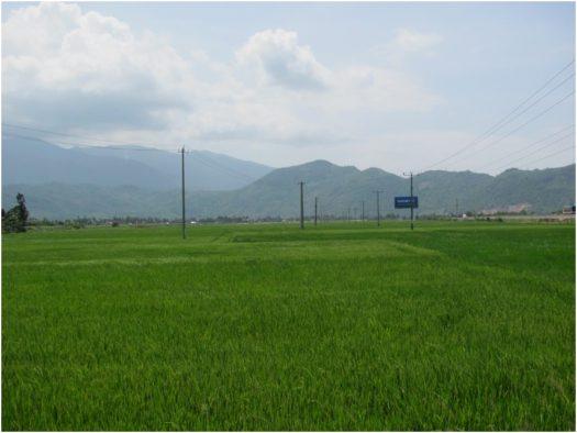 Рисовые поля под Нячангом