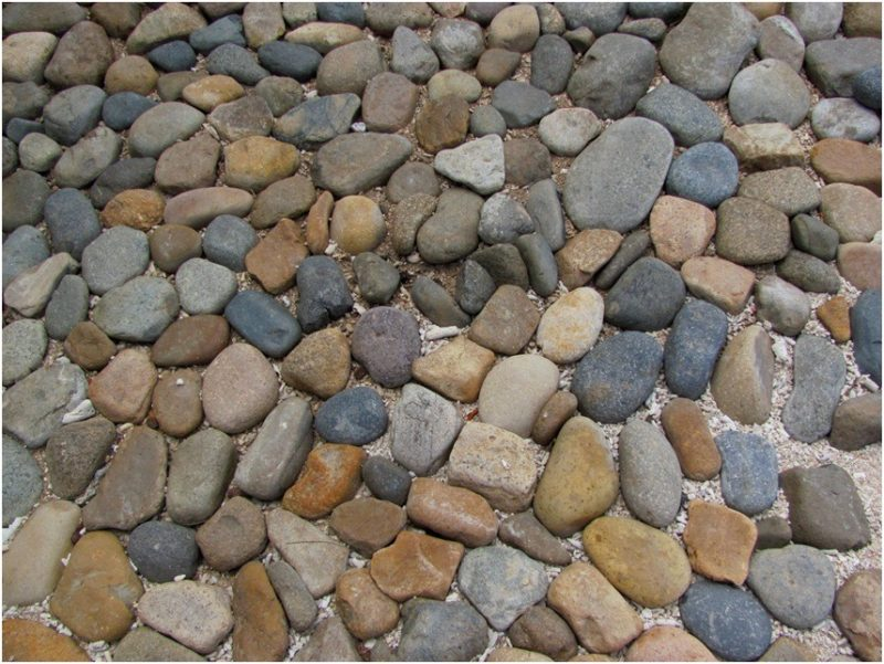 Про плесень, муравьев, баг сайта с авиабилетами и другие подводные камни, или Чего опасаться в Нячанге во время зимовки - часть 1