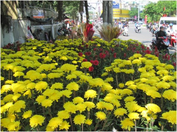 Цветы на улицах Нячанга перед Тетом